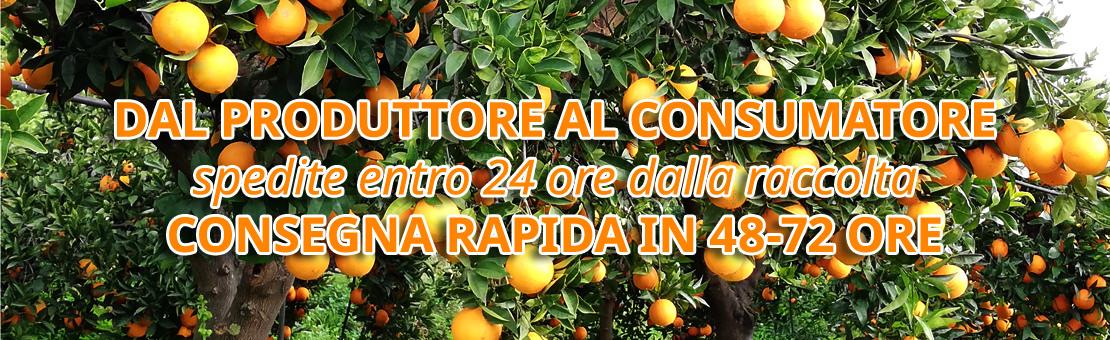 Arance di Ribera DOP e Agrumi di Sicilia direttamente sulle vostre tavole   Per formati e richieste particolari, o per acquistare per conto di Gruppi di Acquisto Solidale, vi invitiamo a contattarci.